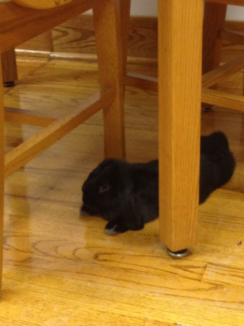 Rabbit under the Table   Pale Yellow