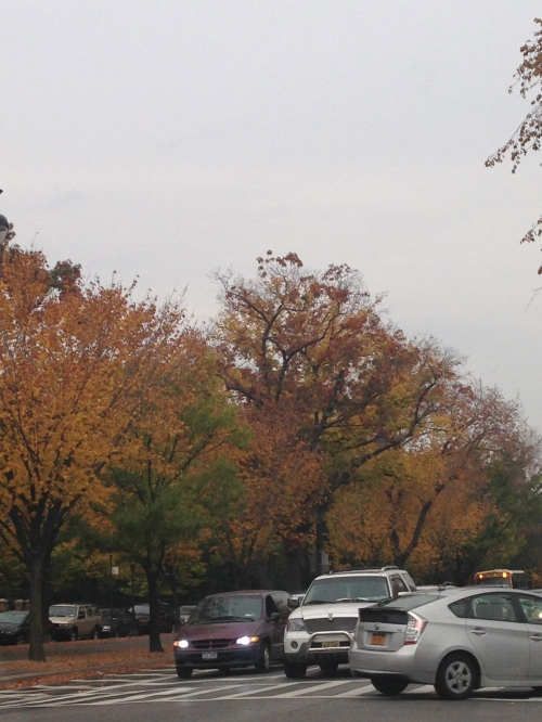 Working to hard recognize and celebrate the autumnal beauty on my drive home!