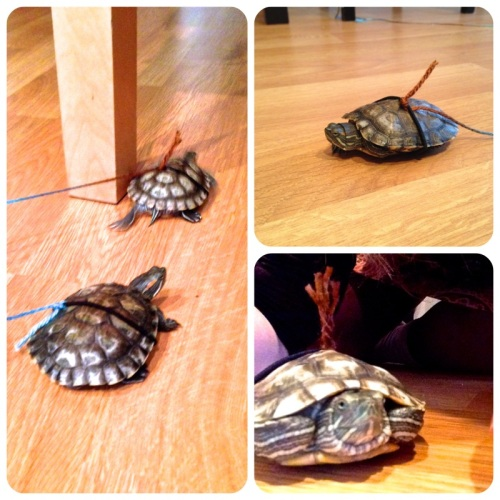 turtles on leashes | pale yellow